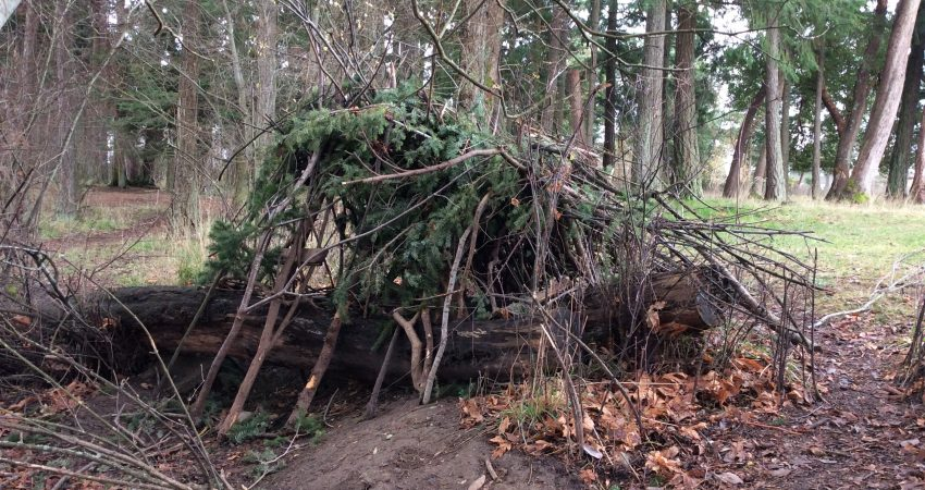 Forts in the Back Forest…